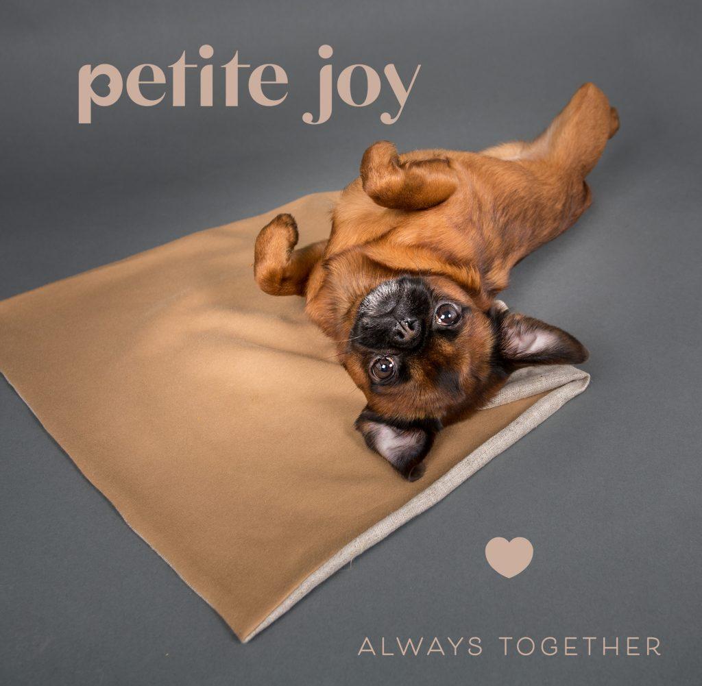 Brabançon sur tapis pour chien, Nathalie Tiennot photographe