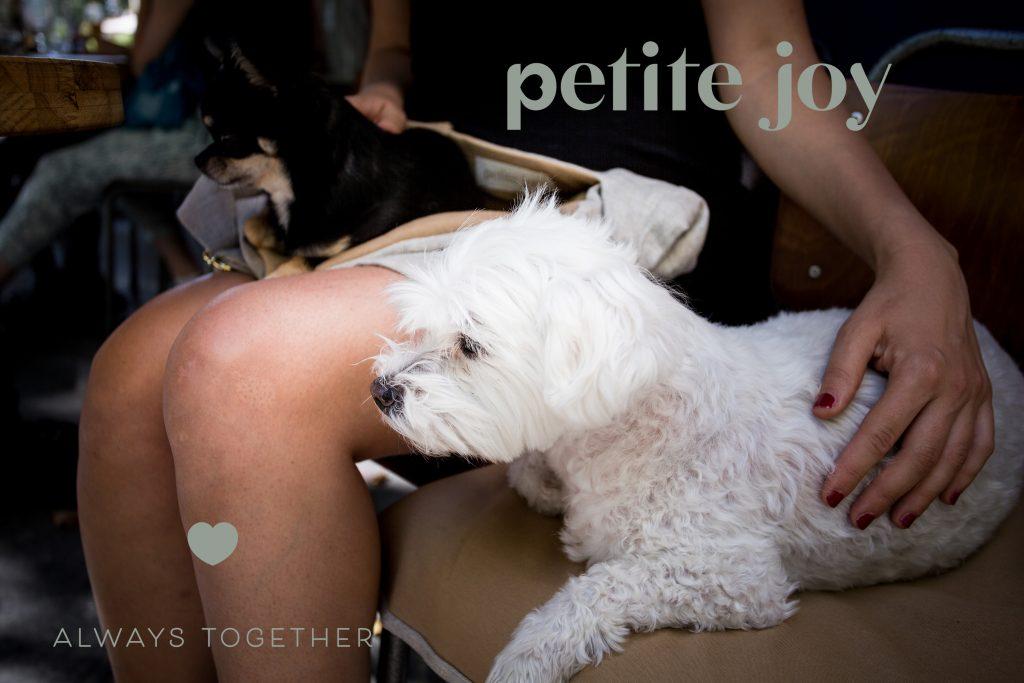 Shooting publicitaire pour petits chiens à Bourges par agence Denatt